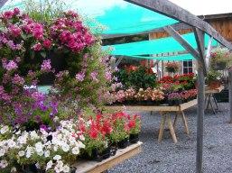 carp-garden-centre_DSCF1198