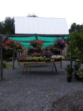 carp-garden-centre_DSCF1199