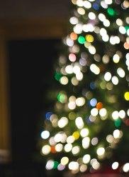 Carp Christmas trees for sale