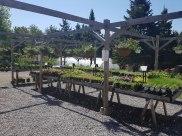 annual-plants-carp-garden-centre