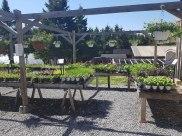 hanging-baskets-carp-garden-centre