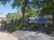 ottawa-fir-trees_20180516_105927