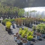 ottawa-garden-perennials