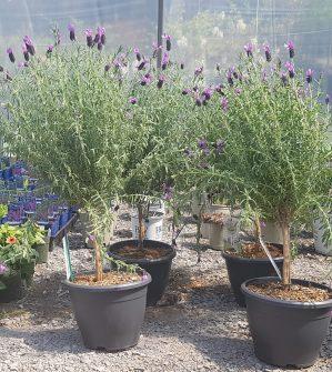 ottawa-perennials