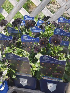 ottawa-perennials-garden_20180516_111006