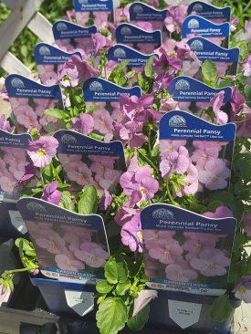 ottawa-perennials-garden_20180516_111011