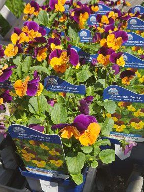 ottawa-perennials-garden_20180516_111017