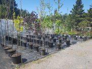 ottawa-trees-garden-centre