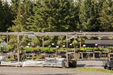annual-plants-flowers-ottawa-garden-centre_LDP_5406