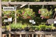 annual-plants-flowers-ottawa-garden-centre_LDP_5414