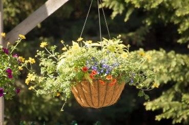 annual-plants-flowers-ottawa-garden-centre_LDP_5417-2