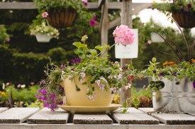 annual-plants-flowers-ottawa-garden-centre_LDP_5446