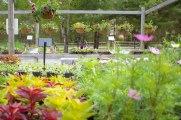 annual-plants-flowers-ottawa-garden-centre_LDP_5536
