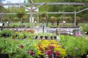annual-plants-flowers-ottawa-garden-centre_LDP_5537