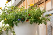 annual-plants-flowers-ottawa-garden-centre_LDP_5551