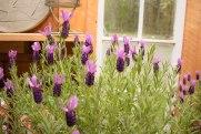 annual-plants-flowers-ottawa-garden-centre_LDP_5574