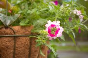 annual-plants-flowers-ottawa-garden-centre_LDP_5577