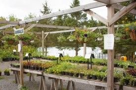 annual-plants-flowers-ottawa-garden-centre_LDP_5578