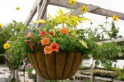 annual-plants-flowers-ottawa-garden-centre_LDP_5580