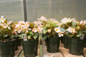 annual-plants-flowers-ottawa-garden-centre_LDP_5605