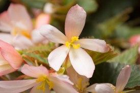 annual-plants-flowers-ottawa-garden-centre_LDP_5607