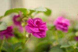 annual-plants-flowers-ottawa-garden-centre_LDP_5620