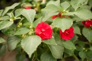 annual-plants-flowers-ottawa-garden-centre_LDP_5621
