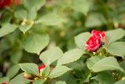 annual-plants-flowers-ottawa-garden-centre_LDP_5623