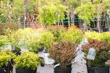 carp-garden-centre-ottawa_LDP_5443