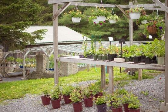 carp-garden-centre-ottawa_LDP_5638
