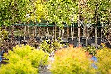 carp-garden-centre-ottawa_LDP_5651
