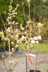 carp-garden-centre-ottawa_LDP_5652