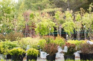 perennial-plants-flowers-ottawa-garden-centre_LDP_5442