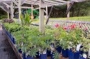 perennial-plants-flowers-ottawa-garden-centre_LDP_5480