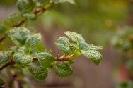 perennial-plants-flowers-ottawa-garden-centre_LDP_5487