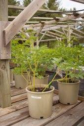 perennial-plants-flowers-ottawa-garden-centre_LDP_5490
