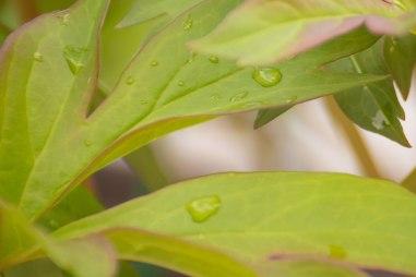 perennial-plants-flowers-ottawa-garden-centre_LDP_5492-2