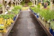 perennial-plants-flowers-ottawa-garden-centre_LDP_5502