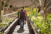 perennial-plants-flowers-ottawa-garden-centre_LDP_5506