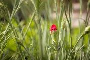 perennial-plants-flowers-ottawa-garden-centre_LDP_5510