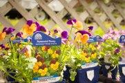 perennial-plants-flowers-ottawa-garden-centre_LDP_5518
