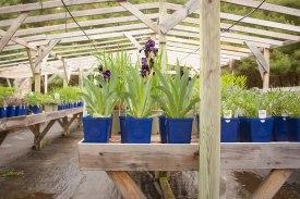 perennial-plants-flowers-ottawa-garden-centre_LDP_5528