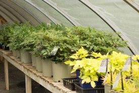 perennial-plants-flowers-ottawa-garden-centre_LDP_5633
