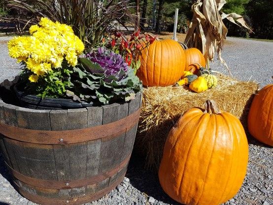 Fall colour at Carp Garden Centre