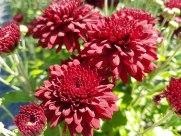 ottawa-fall-garden-centre_20170902_134251