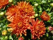 ottawa-fall-garden-centre_20170902_134318