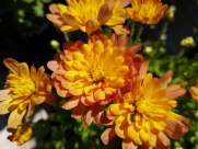 ottawa-fall-garden-centre_20170902_134328