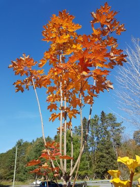ottawa-fall-garden-centre_20171021_113342