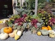 ottawa-fall-garden-centre_20180909_113055