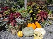 ottawa-fall-garden-centre_20180909_113107